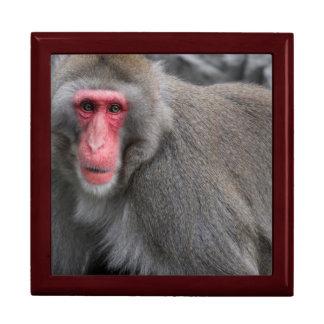 Snow Monkey Wildlife Photo Jewelry Box