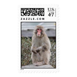 Snow Monkey Wildlife Photo Postage Stamp