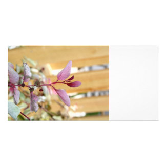 snow moutain plant pink purple against wood.jpg photo greeting card