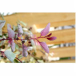 snow moutain plant pink purple against wood.jpg photo cutouts