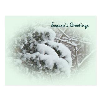 Snow on Arbor Vitae Postcard
