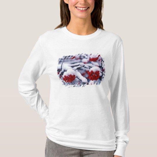 Snow on European Mountain Ash Berries, Utah. T-Shirt