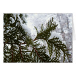 Snow on Evergreen Branches Winter Cards