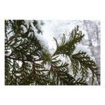 Snow on Evergreen Branches Winter Nature Photo