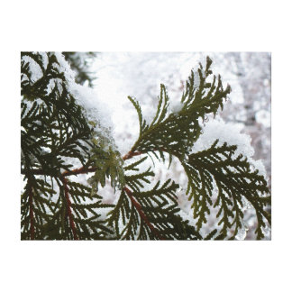 Snow on Evergreen Branches Winter Nature Photo Canvas Print