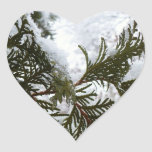 Snow on Evergreen Branches Winter Nature Photo Heart Sticker