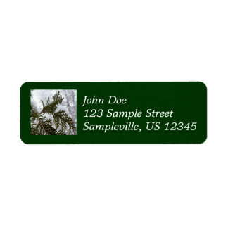 Snow on Evergreen Branches Winter Nature Photo Label