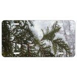 Snow on Evergreen Branches Winter Nature Photo License Plate