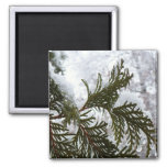 Snow on Evergreen Branches Winter Nature Photo Magnet