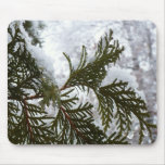 Snow on Evergreen Branches Winter Nature Photo Mouse Pad