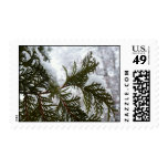 Snow on Evergreen Branches Winter Nature Photo Postage