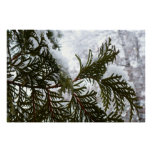Snow on Evergreen Branches Winter Nature Photo Poster