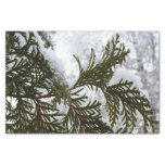 Snow on Evergreen Branches Winter Nature Photo Tissue Paper