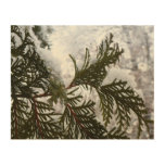 Snow on Evergreen Branches Winter Nature Photo Wood Wall Art