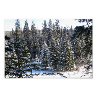 Snow on Evergreens Photo Print