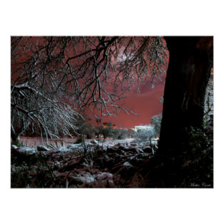 Snow on olive trees poster