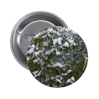 Snow on Pine Branches Pinback Button