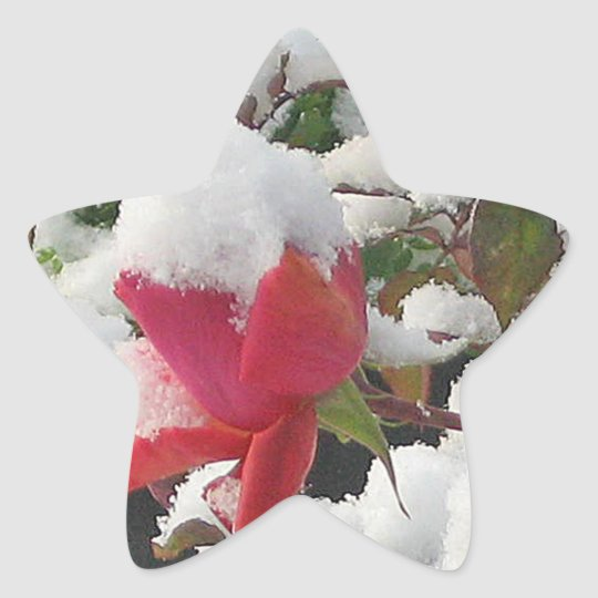 Snow on Rose Sticker