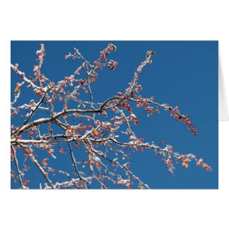 Snow on the crabapple greeting card