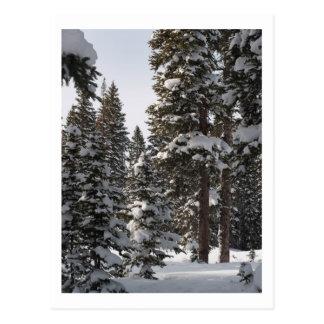 Snow on the Mesa Postcard