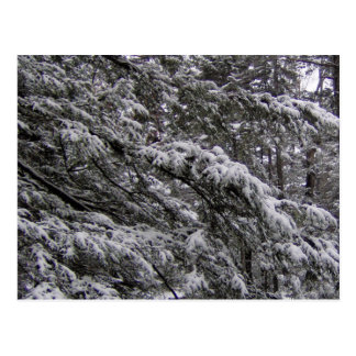 Snow on tree branches Postcard - Add your own text