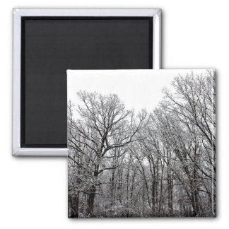 Snow on Trees Refrigerator Magnets