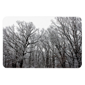 Snow on Trees Magnets