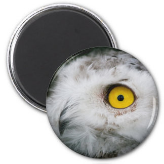 Snow Owl 2 Inch Round Magnet