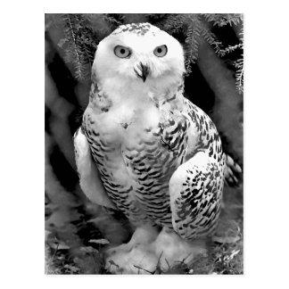 Snow Owl Baby Postcard
