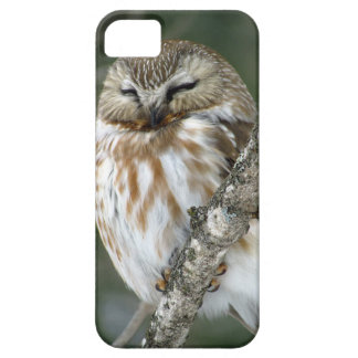 Snow Owl Case iPhone 5 Covers