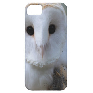 Snow Owl iPhone 5 Cover