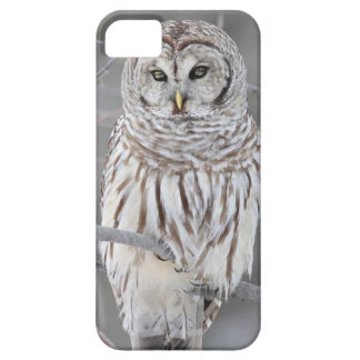 Snow Owl iPhone 5 Covers