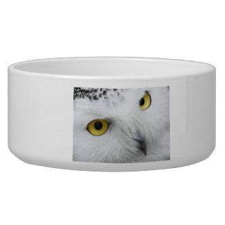 Snow Owl Eyes Dog Bowls