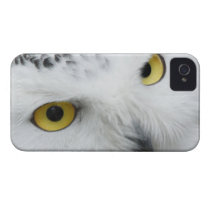 Snow Owl Eyes iPhone 4 Case-Mate Case