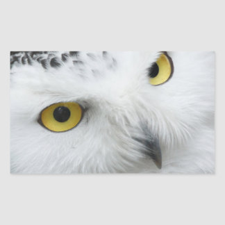 Snow Owl Eyes Rectangular Sticker
