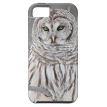Snow Owl iPhone SE/5/5s Case