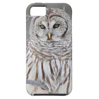 Snow Owl iPhone SE/5/5s Case