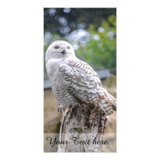 Snow owl photo card