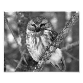 Snow Owl Photo Print BW