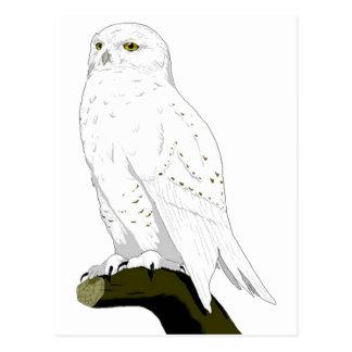 Snow Owl Postcard