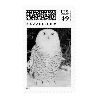 Snow Owl USPS Holiday Card Stamps 2014