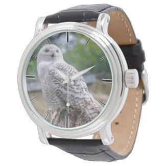 Snow owl watch