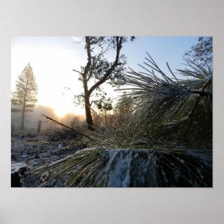 Snow Ponderosa Pine Perspective Print