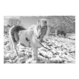 Snow Ponies - Photo Prints