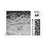 Snow Postage Stamps