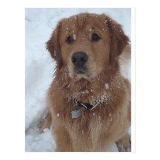 Snow Pup Magellan, Aurora, CO Postcard