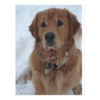 Snow Pup Magellan, Aurora, CO Postcards