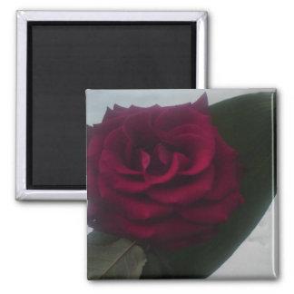 Snow rose refrigerator magnet