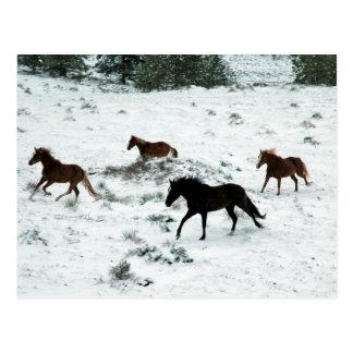Snow Run Postcard