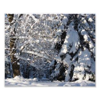 Snow Serenity 10x8 Photograph